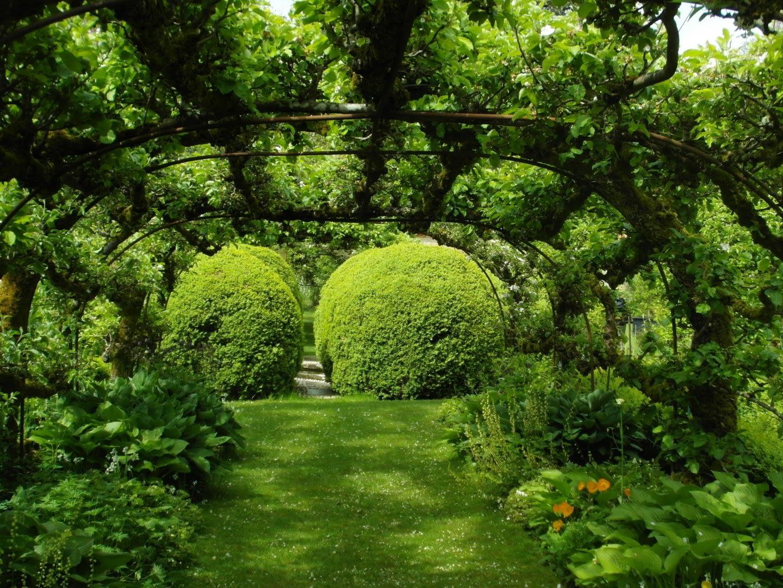 groen tuin met pergola en grote struiken en heggen in het Westland