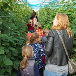 moeder met groepje kinderen in een glazen kas tussen frambozen bii Plukkerij Framblij in het Westland