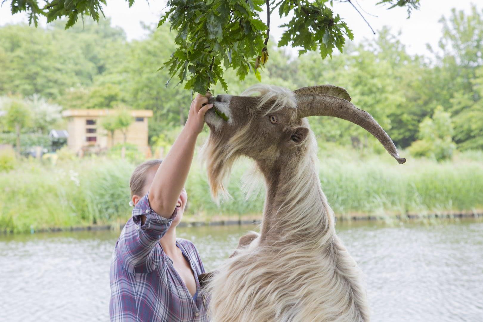 jonge vrouw met geit bij Het Westerhonk in het Westland