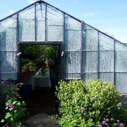 oude witgekalkte druivenkas op het terrein van Druivenkwekerij Nieuw Tuinzight in het Westland
