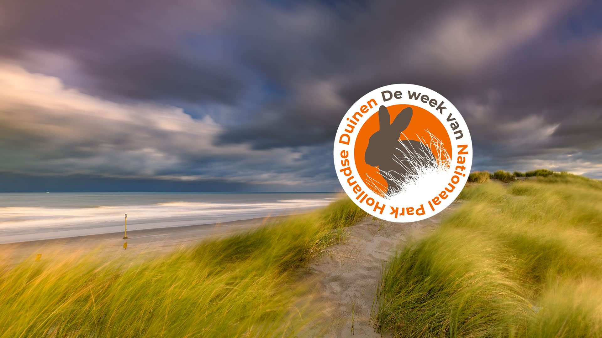duinen in het Westland op een stormachtige dag in het Nationaal Park Hollandse Duinen