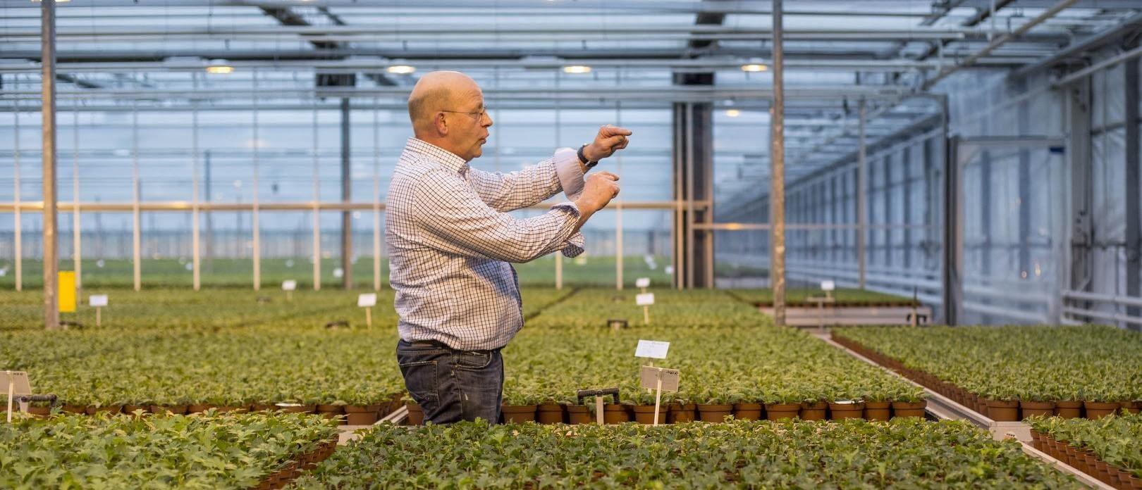 gids Aad Verduijn geeft uitleg over de glastuinbouw in een kas in het Westland