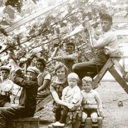 historische zwart-wit foto van een tuindersgezin in een druivenkas terwijl er druiven geoogst worden in het westland